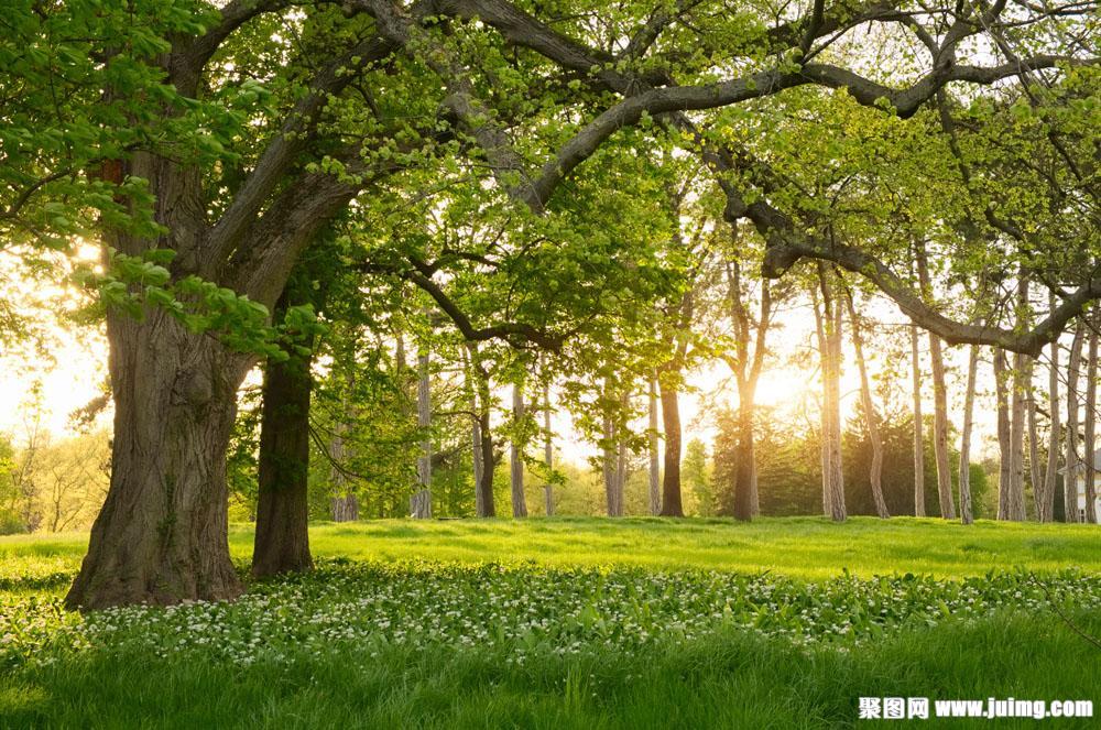 树林草地和夕阳
